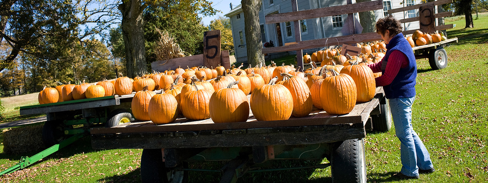 Woman selecting pumpkins for sale at a farm in Mohawk Valley of New York State